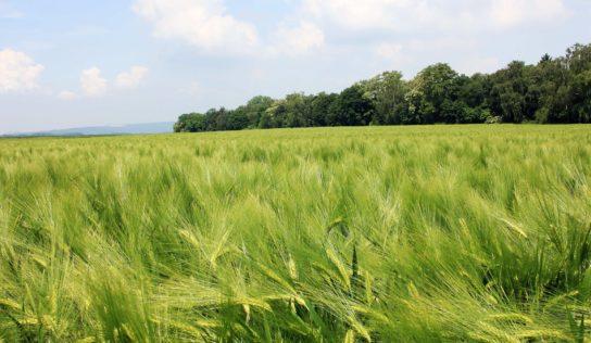 Aider les paysan.ne.s en difficulté peut aussi être l'occasion de lutter contre la précarité alimentaire