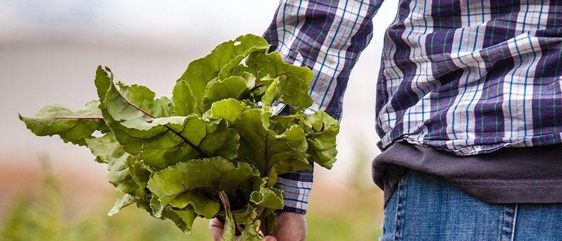 Stratégie « De la ferme à la fourchette » : renforçons l'ambition pour un système alimentaire européen résilient !