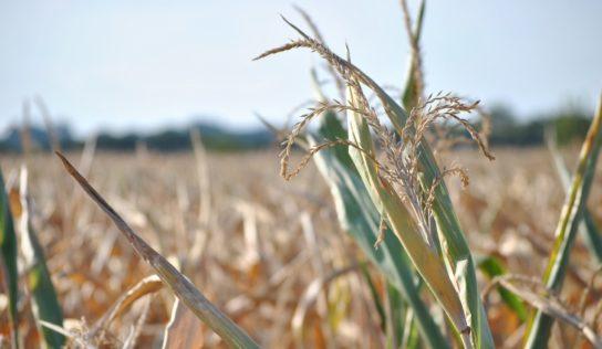 Sécheresse : les paysans n'ont pas besoin de produits financiers toxiques mais d'un changement ambitieux des pratiques agricoles