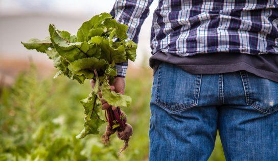 La stratégie Farm to Fork peut mieux protéger les consommateurs et le marché intérieur